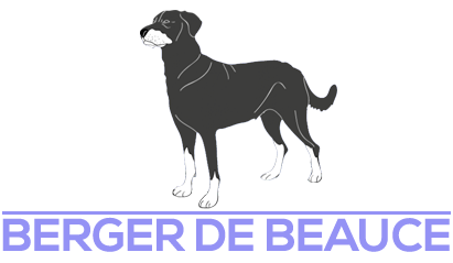 Berger de Beauce du domaine de Glade